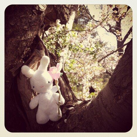wish bunny 1