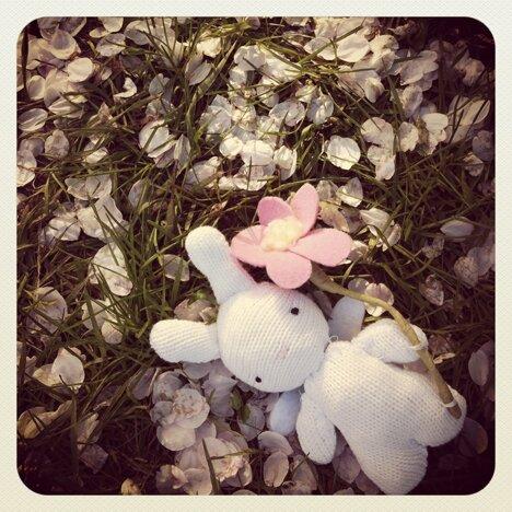 wish bunny 2