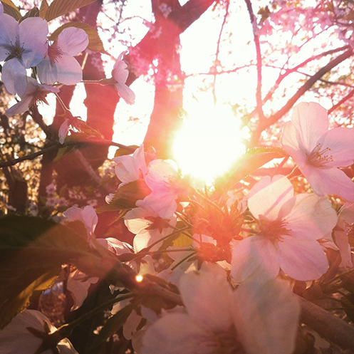 Photo 2015-05-07, 7 34 21 PM