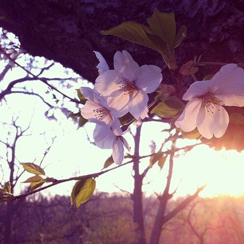 Photo 2015-05-07, 7 49 32 PM